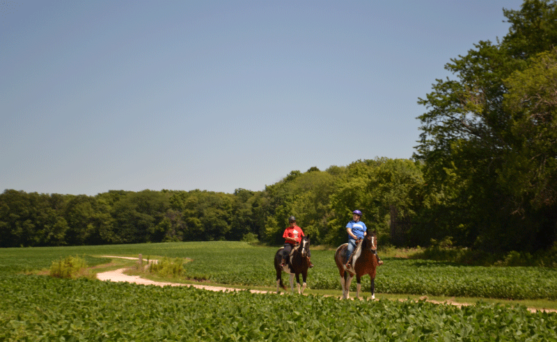 Bakers Wood - People Riding Horses